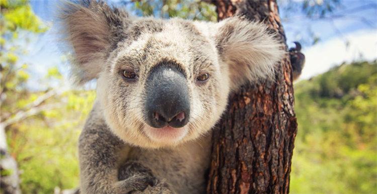 想要抢先入驻亚马逊澳洲站,了解卖什么怎么卖?